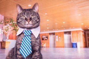 Bild von einer Katze mit Kravatte