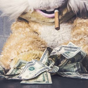 Bild von einem Teddy mit Zigarre und Banknoten