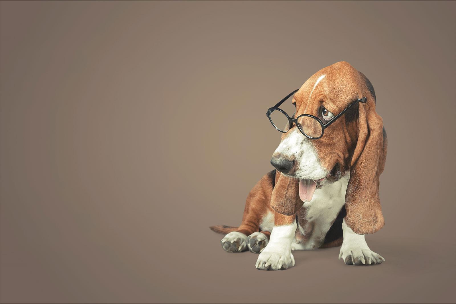 Bild von einem Hund mit Brille